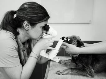 Ophtalmologie à la clinique vétérinaire des Arènes