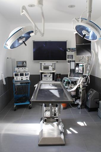Chirurgie des tissus mous à la clinique vétérinaire des Arènes